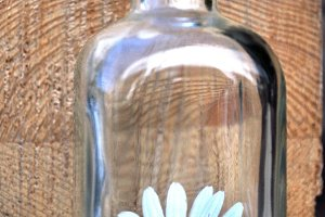 daisy in a bottle