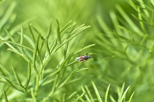 A simple bug in the green immensity