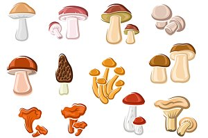 Forest delicacy edible mushrooms set