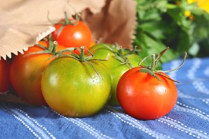 Spring tomatoes on table cloth