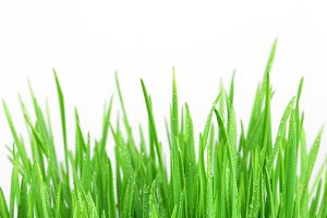 Fresh grass on the white background