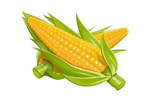 Corn vector illustration eps10 isolated white background