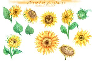 Watercolor Sunflower Set