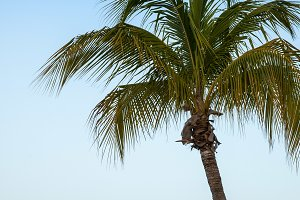 Palm tree with Caribbean ocean