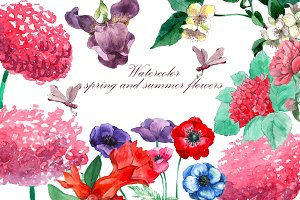 Watercolor spring and summer flowers