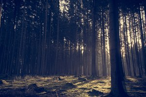 Moody Forest in Spring (Vintage)