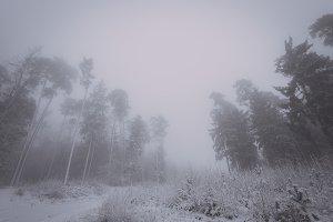 Snowy Forest Landscape (Vintage)