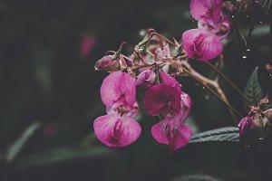 European Flora (Vintage Look)