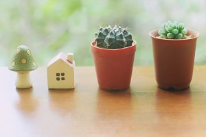 Cactus with small house and mushroom