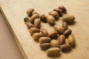 Oak and ilex acorns