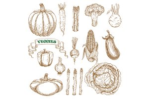 Garden and farm vegetables sketches