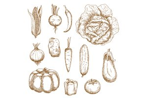 Healthy farm vegetables sketches