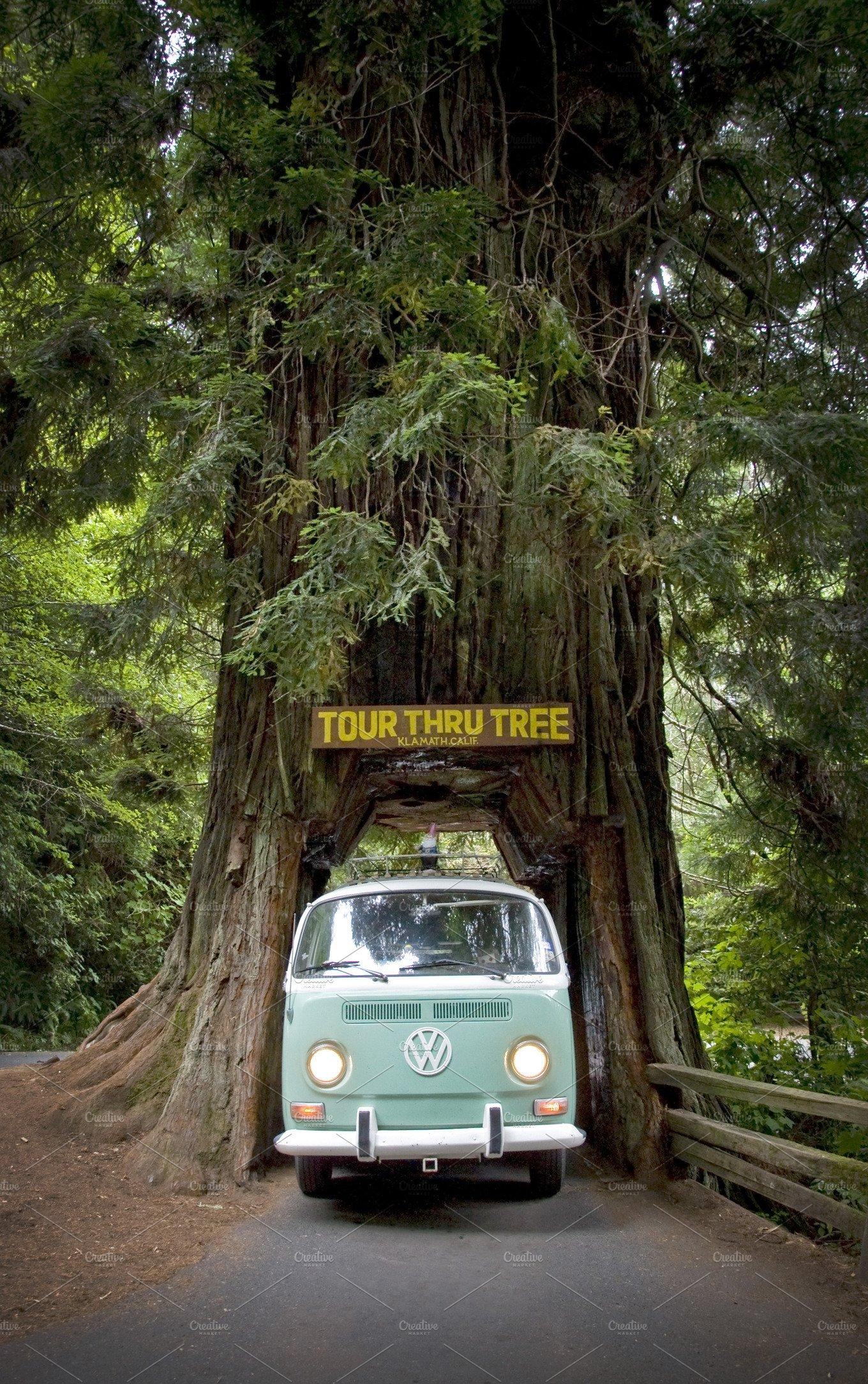Vw bus drive through tree nature photos creative market arubaitofo Images