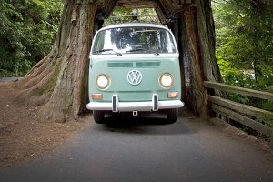 VW Bus & Drive Through Tree