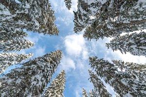 Look up the winter sky