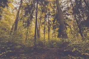Fresh Green Forest in Autumn