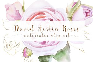 watercolor flowers, roses clip art