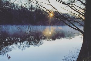 Morning on the Bayou