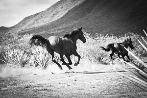 horses running in a tequila