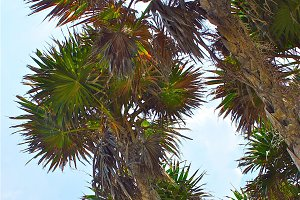 Little Palms