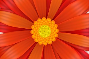 Bright red gerbera flower in bloom