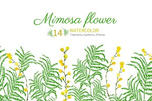 Set of watercolor mimosa flower