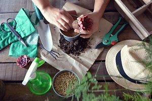gardener doing gardening work