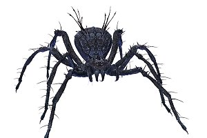 Scary Spider. 7 images. 8000x6000 px