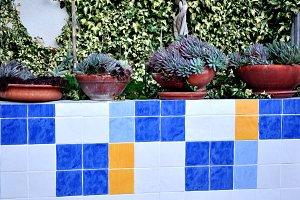 pots of succulents