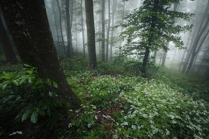 Spring forest with white flowers