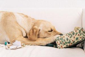 Dog tearing up Christmas present
