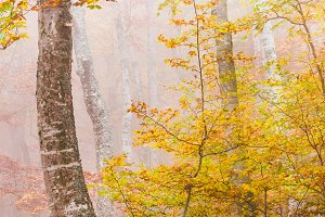 Moody woods