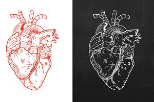 Heart, natural heart, sketch heart