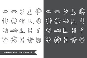 Human Anatomy Body Parts Icons
