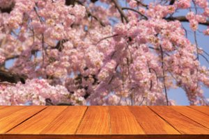 Wood table top on Sakura flower