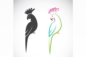 Vector image of a parrot design