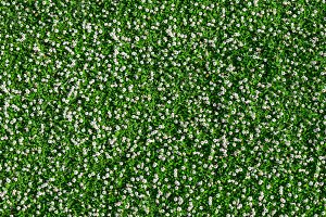 Many white daisies in top view of meadow.