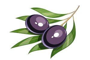Pair of black olive vector illustration eps10