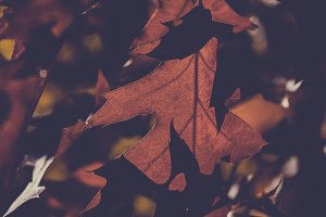 Autumn Leaves in Vintage Colors