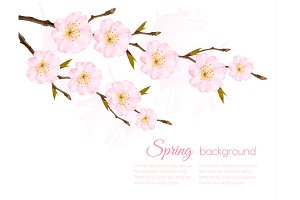 Spring Background With Sakura