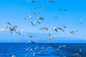 Flying seagulls
