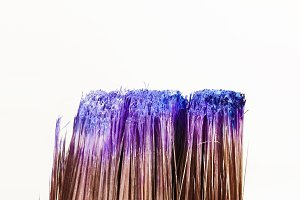 Blue and Purple Paint on Paintbrush