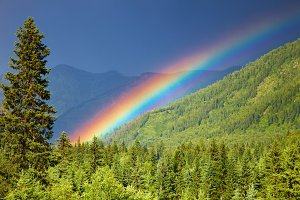 Rainbow over forest
