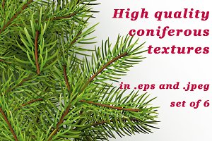 High quality coniferous textures set