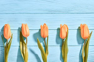 Mothers Day background.Tulips orange on blue wood