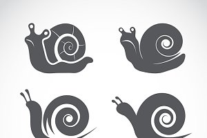 Vector group of a snail