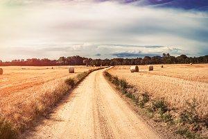 Romantic wheat field