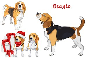 Beagle dog SET
