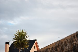 house, tree and sky