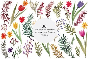Plants and flowers, vector